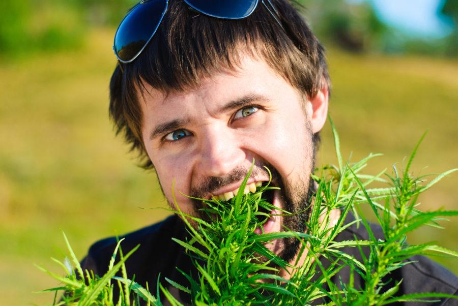 запретные травы