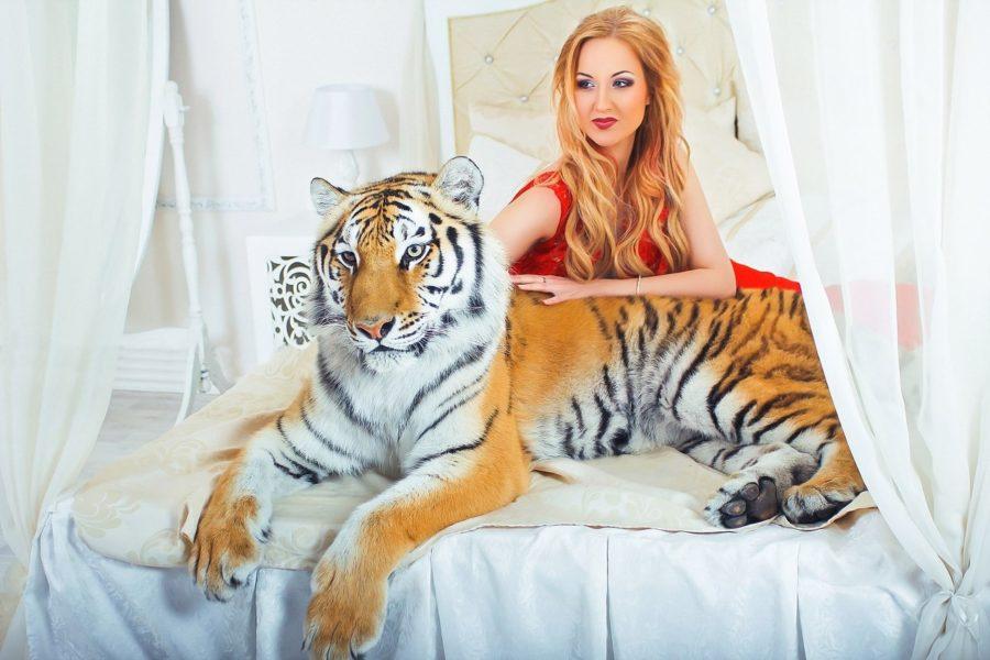 женщина тигрица в постели