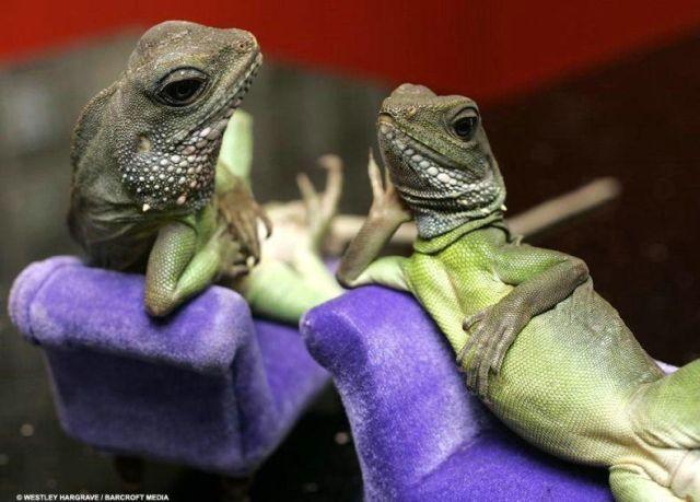 Смешные рептилии