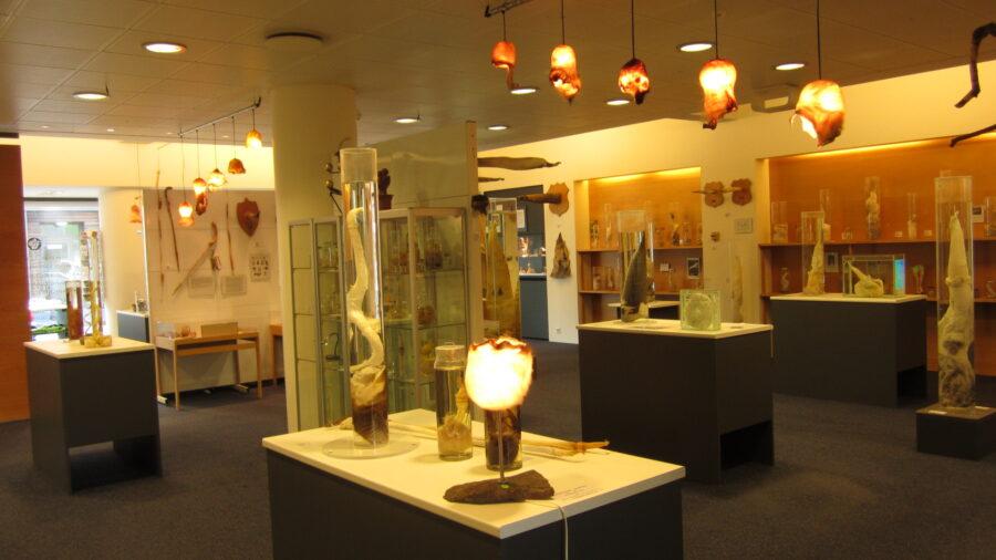 Исландский фаллологический музей
