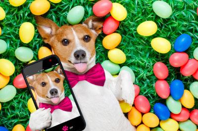 Собачья любовь: сайт знакомств для питомцев