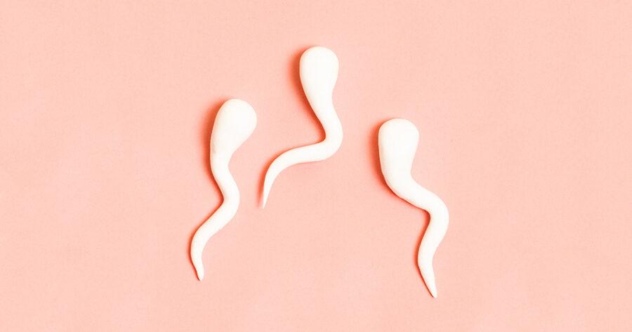 три сперматозоида