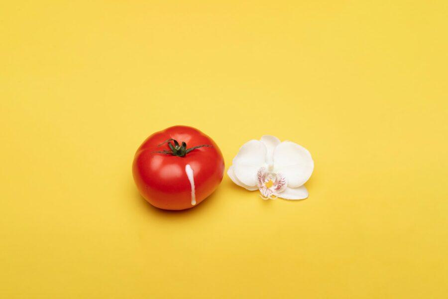 помидор с капелькой и цветком