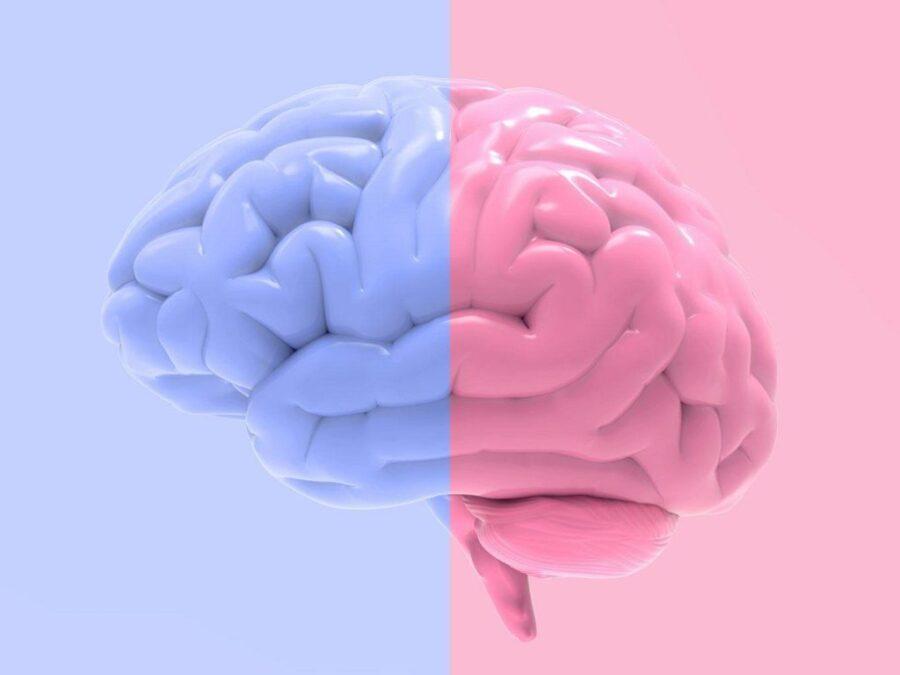 голубой и розовый мозг